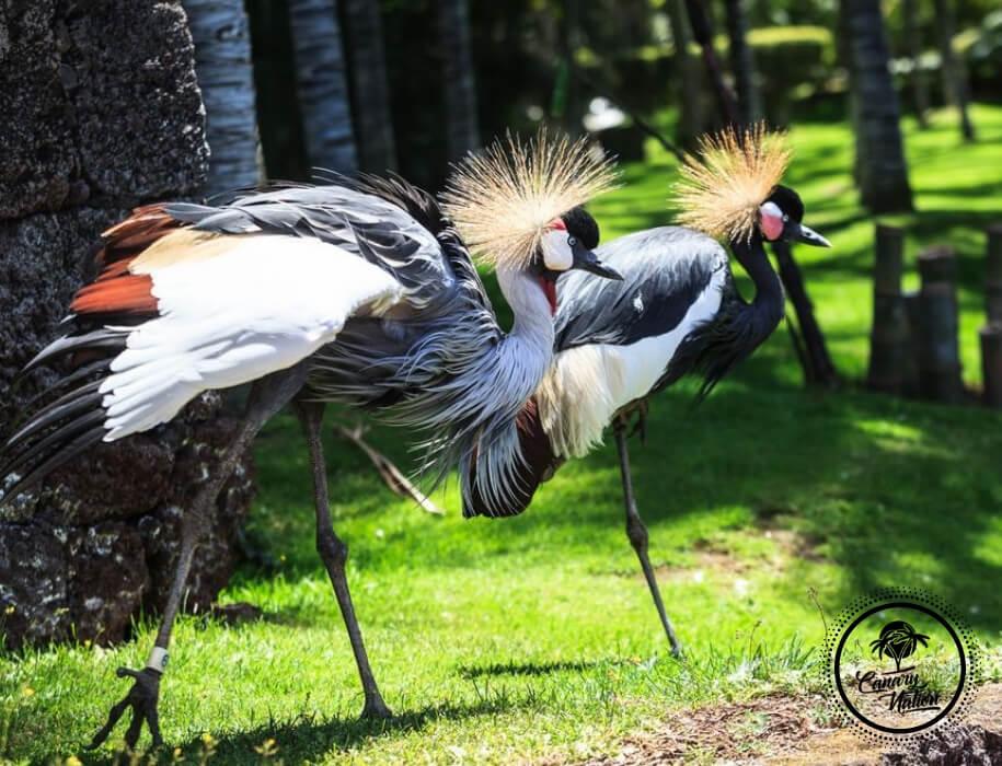 crane-bird-loro-park-tenerife