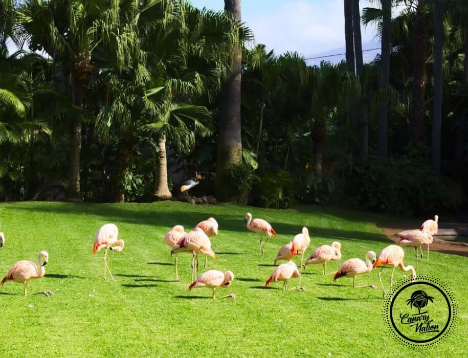 flamingo-loro-park-tenerife