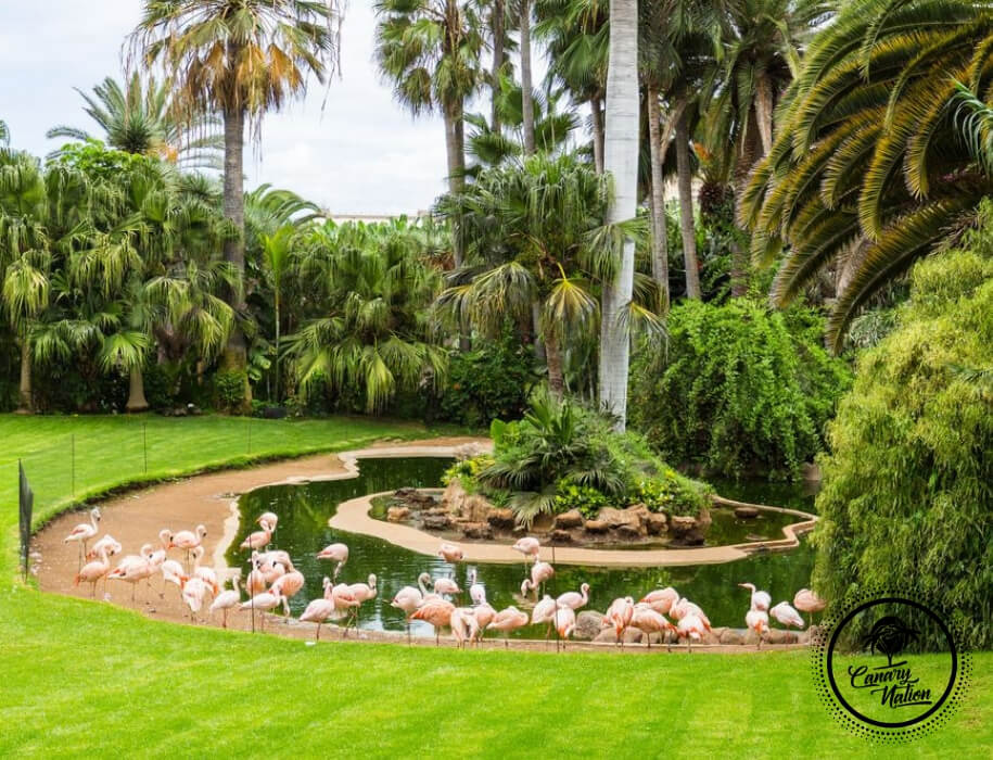 flamingo-pink-loro-park-tenerife