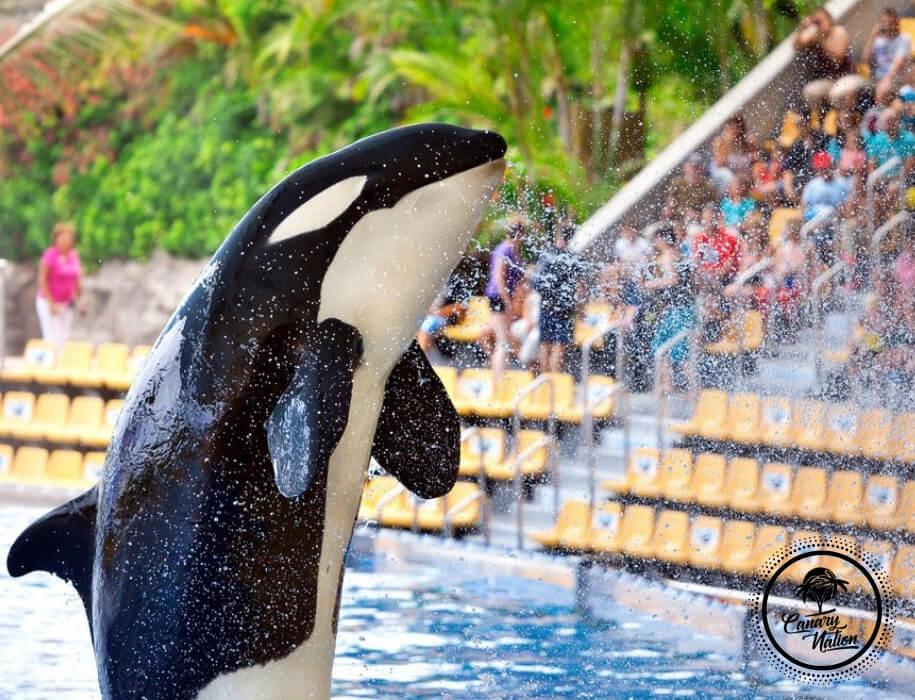 killer-whale-water-loro-park-tenerife