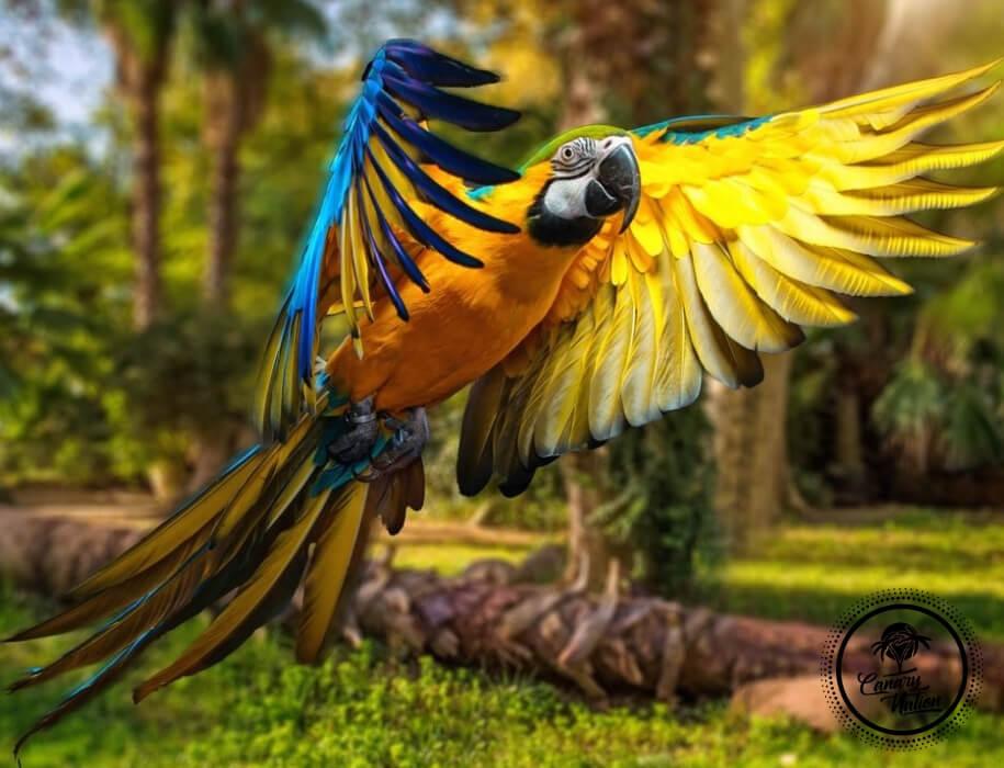 parrot-yellow-loro-park-tenerife
