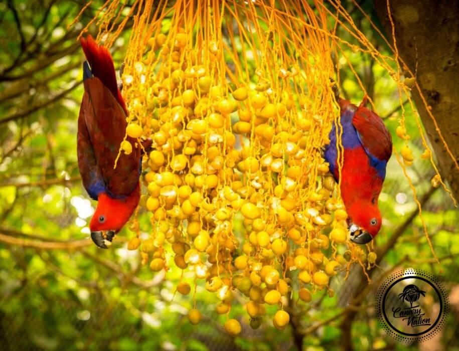 red-parrots-loro-park-tenerife