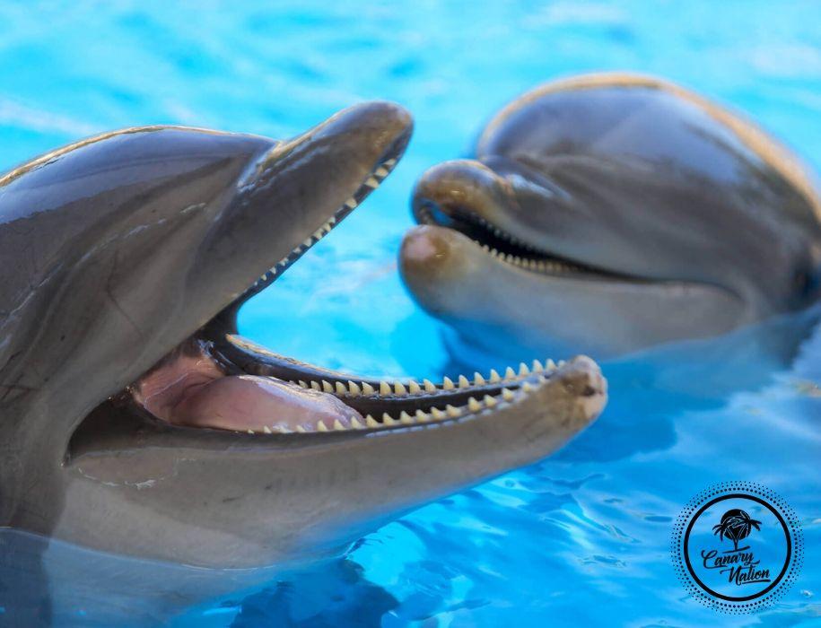 dolphins-loro-parque-tenerife
