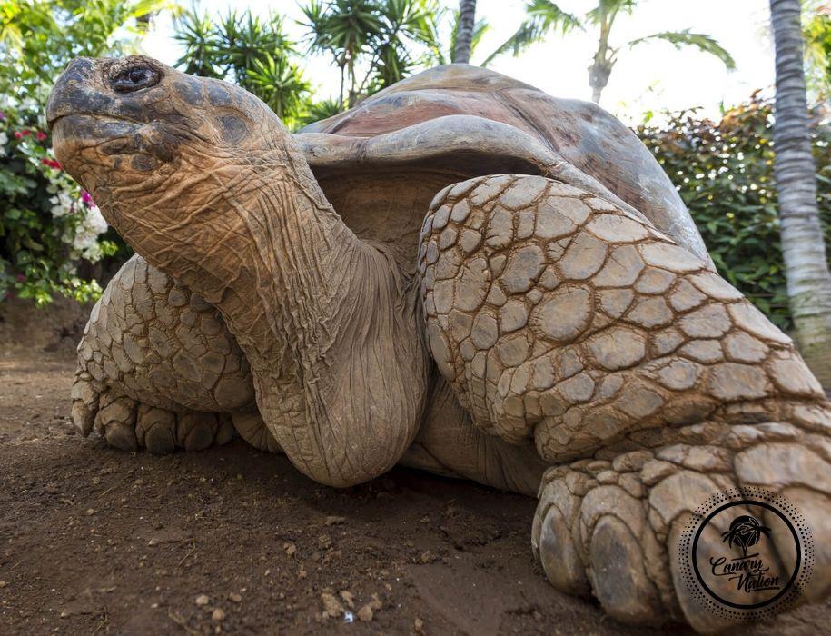 tortuga-loro-parque-tenerife