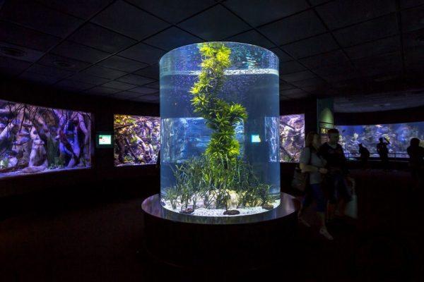 acuario-loro-parque-tenerife