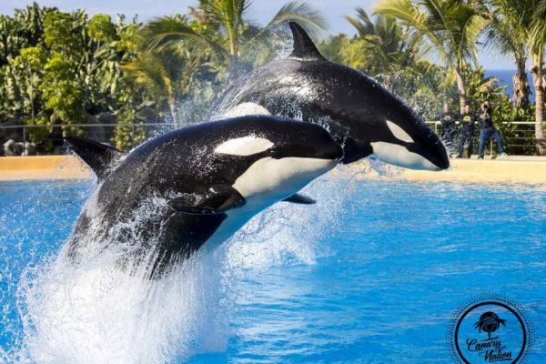 orca-loro-parque-tenerife