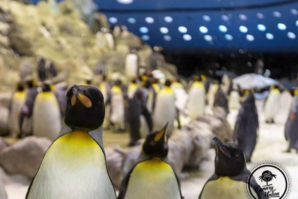 penguin-loro-parque-tenerife