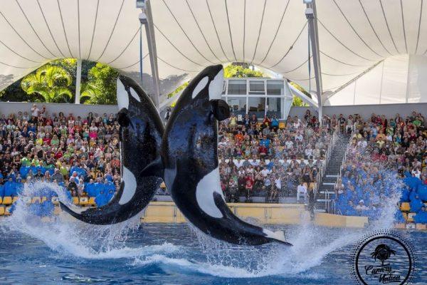 whale-loro-parque-tenerife